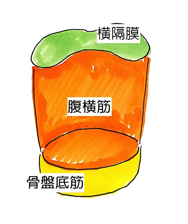 横隔膜・腹横筋・骨盤底筋